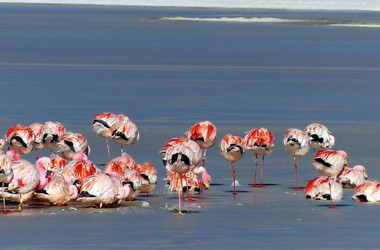 Flamingos in der Atacamawüste